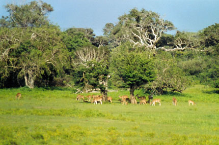 im Yala Nationalpark 2002